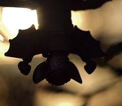 dusk approaches (Johnson Cameraface) Tags: autumn macro 50mm olympus september f2 zuiko 2012 manbat zd e620 johnsoncameraface