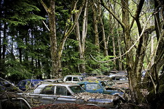 Autofriedhof (bass_nroll) Tags: old friedhof art history cars beauty graveyard car vw canon vintage model all place suisse fiat mercury unique cadillac rights bmw etc dodge bern rolls junkyard stories oldies reserved royce handycraft ch confederation bianchi lancia reportage simca porshe merceds autofriedhof autograveyard helvetique 450d bassnroll kaufdorf messerli grbeatl thispicturesareprecioustome