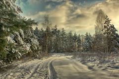 En attendant Godot (cybertoman) Tags: schnee winter snow landscape landschaft wald rockpaper naturepoetry ringexcellence bestevercompetitiongroup kurtpeiserexcellence besteverdigitalphotography vigilantphotographersunite vpu2 vpu3 vpu4 vpu5 vpu6 vpu7 vpu8