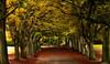 Bristol Autumn (deep blue2) Tags: autumn trees season bristol colours foliage avenue nikon18200mm yahoo:yourpictures=myautumn yahoo:yourpictures=yourbestphotoof2012