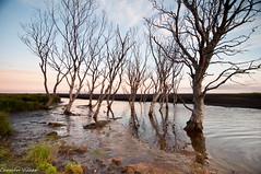 Hvoll, Kirkjubaejarklaustur islandia (carmenvillar100) Tags: rio iceland islandia nikon arboles d90 kirkjubaejarklaustur hvoll
