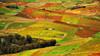 autunno siciliano (Proprionegato) Tags: autumn italy fall countryside nikon italia country campagna sicily autunno sicilia artlegacy bestcapturesaoi elitegalleryaoi creativephotocafe