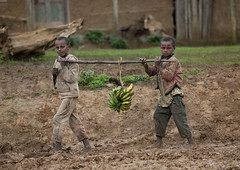 Young Intrigated Boys Carrying A Bunch Of Bananas On A Stick In The Mud, Hossana, Omo Valley, Ethiopia (Eric Lafforgue) Tags: poverty africa people food color grass horizontal wall outside photography kid colorful day village child mud serious outdoor poor working fulllength young banana dirty barefoot trunk omovalley ethiopia curiosity groupofpeople muddy suspicion suspicious carrying childlabour severe childlabor hornofafrica omo eastafrica greenbanana realpeople twokids mistrust colorimage intrigued lookingatcamera interrogative woodenstick childrenonly africanethnicity twoperson hossana twoyoungboys direstrait landgrabbing ethiopianethnicity adultexpression eth5980 twoyoungkidsonly