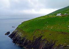 The Dingle Way, Co. Kerry - Ireland (Mic V.) Tags: ocean county ireland water landscape coast republic dingle eire kerry atlantic co coastline paysage peninsula munster irlande atlantique ocan chiarra contae glanfahan chiarrai