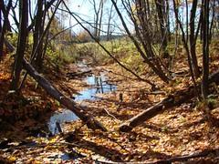 Ruisseau dans le boisé (clementlambert67) Tags: wood tree nature water automne site eau mort arbres morte paysage foret sentier bois feuille environnement flaque branche ruisseau drummondville boisé centreduquébec