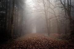 Into the fog (derScheuch) Tags: autumn trees mist leaves fog geotagged deutschland 50mm nebel minolta path f14 sony herbst af alpha wald bltter bume 900 weg dunst pfad ammerland wildenloh bume friedrichsfeh geo:lat=5312286481684242 geo:lon=811713695526123