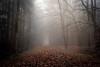 Into the fog (derScheuch) Tags: autumn trees mist leaves fog geotagged deutschland 50mm nebel minolta path f14 sony herbst af alpha wald blätter bäume 900 weg dunst pfad ammerland wildenloh bã¤ume friedrichsfeh geo:lat=5312286481684242 geo:lon=811713695526123