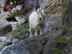 156-1 (PotomacMountainClub) Tags: alpineclimbing