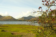 Derwent Water Berries (James Woodward) Tags: uk red england mountain lake tree green water grass bush berry branch berries district bare derwent hill cumbria shrub keswick