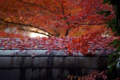 Autumn in Kyoto #9 (joka2000) Tags: roof red yellow temple leaf kyoto drop momiji japanesemaple kaede
