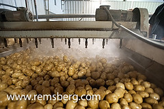 Potatoes on a potato farm (Remsberg Photos) Tags: food plant office potatoes factory farm vegetable potato ag processing agriculture rootvegetable conveyorbelt agribusiness officethings cropinsurance agriculturethings