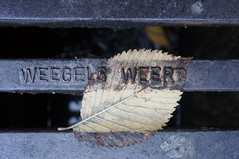 leftover (maartje jaquet) Tags: amsterdam leaf autumnleaves elm iep autumnleaf elmleaf elmleaves stadstuincitygarden iepenblad iepenblaadjes