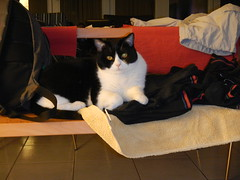 Cats and socks (Ottmar H.) Tags: cat chat gato katze macska  kater  tomcat