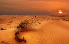 DESERT DREAM (SAUD ALRSHIAD) Tags: sunset sky sun sahara sand flickr arabic saudi arabia arabian sands saudiarabia saud saudia   flickraward thomamah alrshiad  saudarshiad saudalrshiad