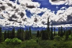 A Meadow View of Denali at Wonder Lake Campground (thor_mark ) Tags: mountains nature alaska unitedstates snowcapped healy blueskies denali day13 taiga mountmckinley project365 denalinationalparkandpreserve colorefexpro grassymeadow cloudsabove nikond90 denalinationalparkpreserve wonderlakeshuttleride