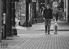 Walk The Line (Ian Sane) Tags: street dog white man black woof oregon portland ian skinny photography furry downtown place walk candid 4th canine images line sidewalk human sw leash avenue morrison pioneer sane the