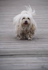 Marina (Maria Eklind) Tags: city dog water animal marina boats se skne sweden hund sverige djur ystad skneln marinan ystadkommun