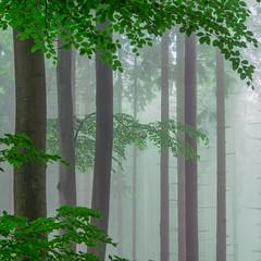 * (sedregh (on/off)) Tags: nebel fog mist bume trees buchen beeches bltter