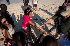 D75_1773 (Andy Kahumbu) Tags: beach kenya watamu hawksbill turtle rescue localoceantrust turtlerelease seaturtle