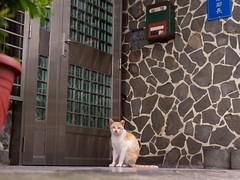 DSC02656 (C*A(t)) Tags: cat straycat streetcat yilan ilan