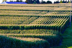Patterns (John Dame) Tags: nebraska corn b1b farm countryroads cornrows church harvest