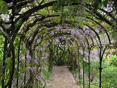 Greys Court (Dubris) Tags: england oxfordshire henley greyscourt nationaltrust garden wisteria