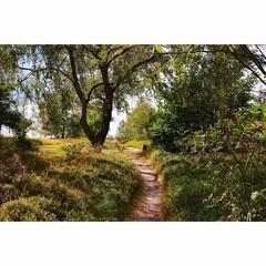Der Weg (Nikonfotografie) Tags: nikond7100 nikon stimmungsvoll licht idylle landscape landschaft landschaftsfotographie landscapephotography naturephotography naturelovers naturfotographie natur heide niedersachsen lneburgerheide