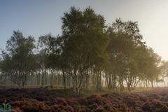 Surprise View in the Mist (James G Photography) Tags: uploadedviaflickrqcom surpriseview overowlertor birchtrees mist fog sunrise sun light trees derbyshire peakdistrict peaks hathersage birch overowler peak sheffield england unitedkingdom gb