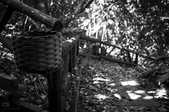 Basura (Cristhian Satake Photography) Tags: 2016 7desetembro ilhajoodacunha itaja omicron portobelo sc santacatarina setembro amigos corrimo famlia feriado folhas fotgrafos ilha lixiera natureza sadafotogrfica trilha lixeira basura trail