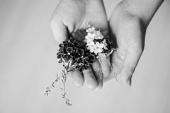 (Anna Kwa) Tags: palm flowers annakwa nikon d750 afsvrmicronikkor105mmf28gifed my  dream love always seeing heart soul throughmylens hands simple life
