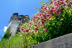 _DSC2067 (TheEmilyElizabeth) Tags: philadelphia philadelphiapa easternstatepenitentiary pennsylvania penitentiary abandoned decay 2014 flower lily urbandecay watchtower guardtower nikond3100