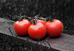 Two tone. (padge83) Tags: nikon d5300 tomatoes bunch blackwhite colour red garden westyorkshire juuicy macro