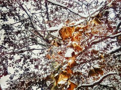 12547286_920453918040344_1718303207_n (dragica_basaric) Tags: winter snow wonderland magic magical snowy flake nature green colours streets treet postcar postcards love train phot january 03 2016 photo photography d b danchy92 dragicabasaric lapovo serbia srbija srb sumadija dbphotography