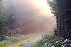 die Sonnenstrahlen (welenna) Tags: autumn wald forest sonnenstrahlen