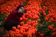 Selfie Central (phunnyfotos) Tags: phunnyfotos australia victoria vic dandenongranges dandenongs thedandenongs silvan red flowers tulips tulip farm flowerfarm lady woman selfie portrait selfportrait cameraphone sunshine spring weather nikon d750 nikond750