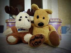 Nunu vous prsente,son pote Rnni (LILI 296 ...) Tags: nunu ours peluche couple duo renne amiti