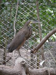 P2230390 (Gareth's Pix) Tags: aviarionacionaldecolombia baru colombia aviario bird