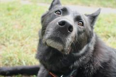 What a Nose! (danieloss86) Tags: nose dog nase hund black schwarz
