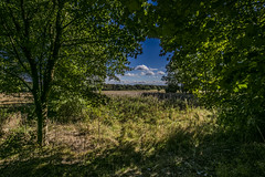 Through The Trees (Arthur Brown PHOTOGRAPHY) Tags: rutland leicestershire irix15mmf24 irix irixblackstone15mmf24