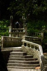 IMG_1862_1 (pavel.milkin) Tags: thailand phuket kathu travel nature kathuwaterfall leaves canon canon550d 550d helios helioslens helios442 442 green stair tree colour bokeh bokehlicious