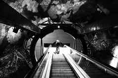 Up (Explore) (Nick Lambert!) Tags: street uk blackandwhite bw london fuji escalator naturalhistorymuseum streetscape fujix100 fujinonasphericallens