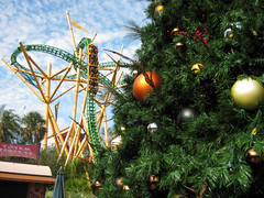 Cheetah Hunt and Christmas Tree (meeko_) Tags: africa christmas tree gardens tampa florida christmastree cheetah rollercoaster crossroads themepark buschgardens hunt busch buschgardenstampa buschgardensafrica buschgardenstampabay cheetahhunt