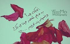 احبك جدا (yteeem.com) Tags: ، تصوير ابداع احبك