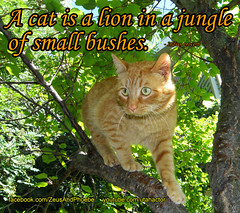 A cat is a lion in a jungle of small bushes (youtube.com/utahactor) Tags: red wild orange pet cats pets playing cute animal sport yellow cat fur mackerel ginger video chats jumping kitten feline funny chat humorous play kodak outdoor teeth tabby humor adorable fluffy gatos olympus whiskers phoebe gato precious gata meow felines spotted hd freckles  darling gatto videos stalking striped furbaby informative tomcat gattina gattino gatta instructional furbabies  youtube  cattitude