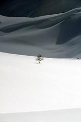 Lyngen_0505 (Torsten Klein) Tags: schnee snow tree norway baum lyngen world100f lyngenalps lim201513