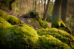 Forest walk (Holly Norval) Tags: trees colour nature forest canon moss vignetting eos400d