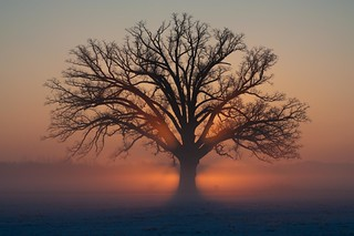 frozen fog at sunrise