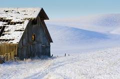 Palouse Winter Barn View (Ryan McGinty) Tags: winter snow barn landscape frozen idaho weathered potlatch palouse latahcounty ryanmcginty