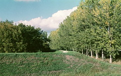 (giovanegian) Tags: autumn light shadow italy tree grass poplar afternoon tranquility calm silence modena absence nikonf801s selfdev afnikkor3570 orwocolorc5168 orwocolornc21iso32emulsion9957expiredmay1991