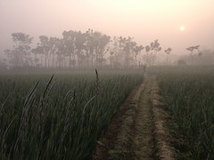 winter morning in the flower field (Shabbir Ferdous) Tags: fog bangladesh iphone wintermorning flowerfield jessore shabbirferdous godkhali
